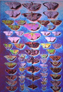 moths by A.Ashman
